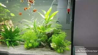 Juwel Aquarium 70 liter!