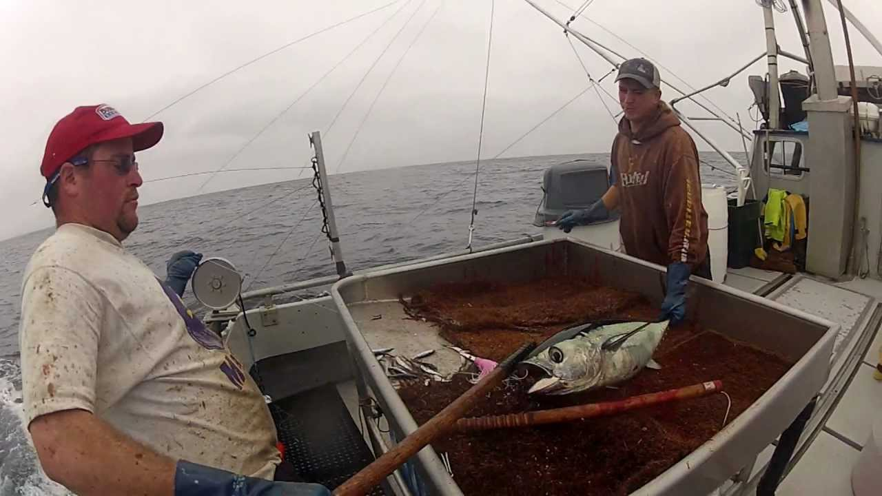 Day in the life f v harvester albacore tuna fishing off for Tuna fishing oregon