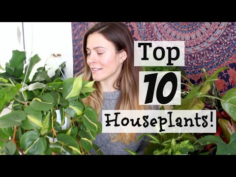 My Top 10 Favorite Houseplants Winter 2019