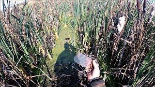Охота на ондатру с капканами КПЯ-120 (Будни охотника и рыбака)