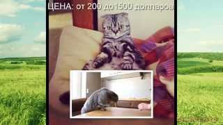 Самые дорогие кошки в мире!
