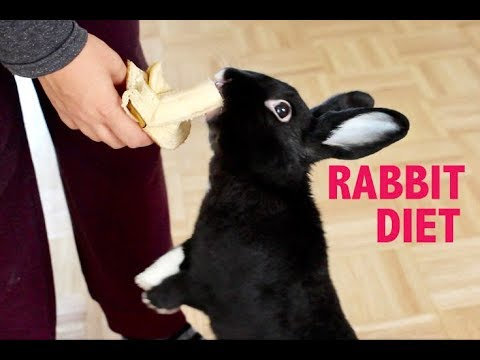 WHAT TO FEED YOUR PET RABBIT