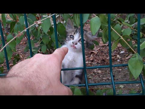 Very Cute Little Kitten.