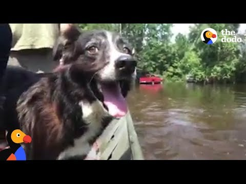 Dog Abandoned In Hurricane Harvey is Finally Rescued | The Dodo