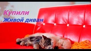 видео Диван моон 042 купить