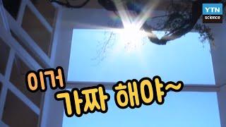 핫클립 햇빛 역할을 하는 LED 조명이 있다  YTN …