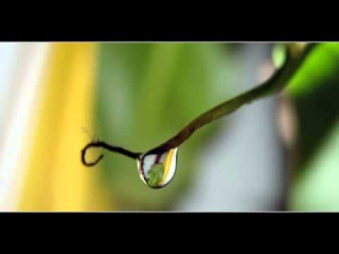 Kerala Nature Beautiful Video Youtube