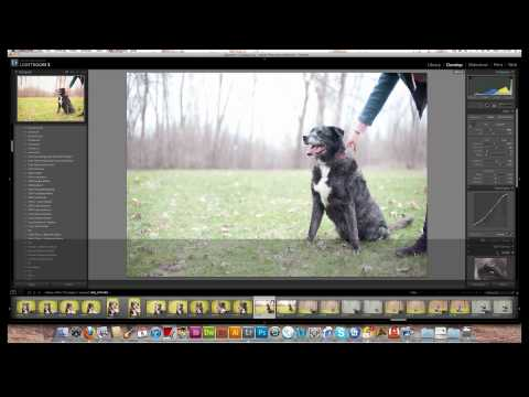 Post-Processing with Mavrick the Dog | Retouching Tutorial