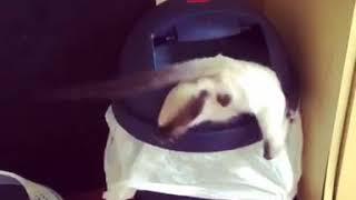 新手のミミックかと思った。ゴミ箱に捕食されてジタバタ暴れまくる猫