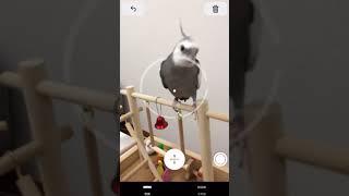 iOS 12 の新機能、ARメジャーアプリ「計測」で我が家の鳥さんたちの体長を測ってみました!