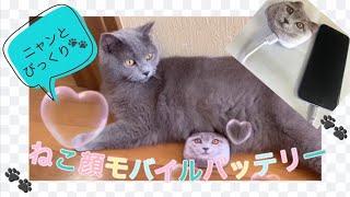 猫好き必須! ネコ顔おもしろモバイルバッテリー