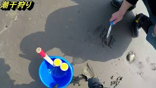 人生二度目の潮干狩り あさり、カガミ貝、磯シジミは簡単に取れるのに ...
