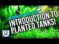Introduction to Planted Tanks (Part 1) - Beginner's Primer to Planted Tanks