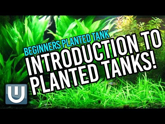 Planted Tanks - A Beginner's Guide   Part 1