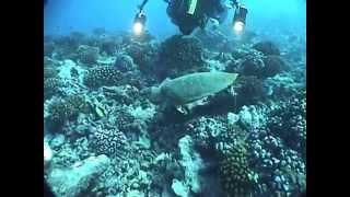 2009年8月Tahiti諸島への旅&Rangiroa環礁でのDiving映像その2です。 ...
