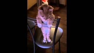 Котенок на стуле