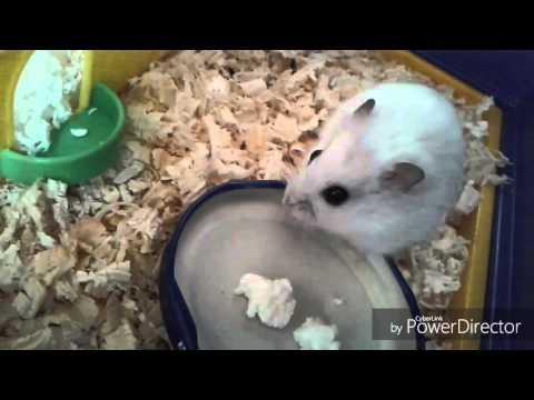 Яблочко в салате