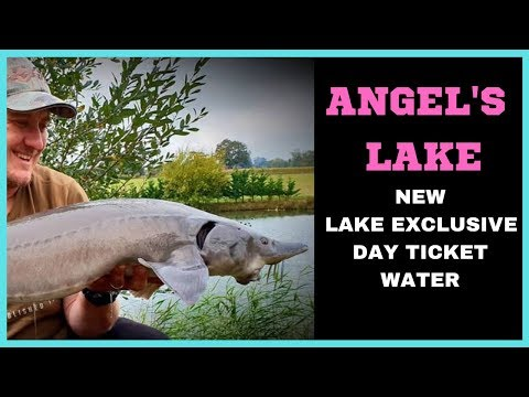 CARP FISHING AT ANGEL'S LAKE (NEW EXCLUSIVE DAY TICKET WATER )