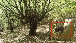 ЧЕБУРАШКА ПУГАЕТ ТУРИСТОВ В ЛЕСУ! дерево бабы яги. жуть в лесу 2020