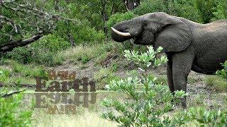 WildEarth - Sunrise Safari - 4 April 2020