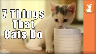 7 Things That Cats Do!