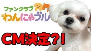 犬用サプリが大人気にわかさ生活さんとひょんなことから親しくなりまし...