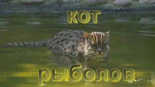 Кот рыболов или виверровый кот