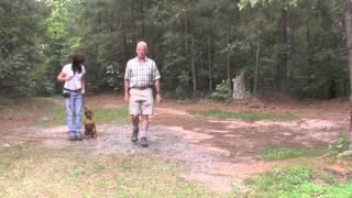 Dog Training, Vizsla, Day 7: Distraction Training At The Park, Greeting People