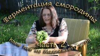 видео 16 лучших рецептов приготовления ферментированных продуктов