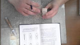 как сделать клык,премоляр из гипса