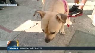 Полицейские задержали мужчину, который пил кровь из собственной собаки