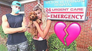 Rushing Our Puppy To The Emergency Room! *Emotional*