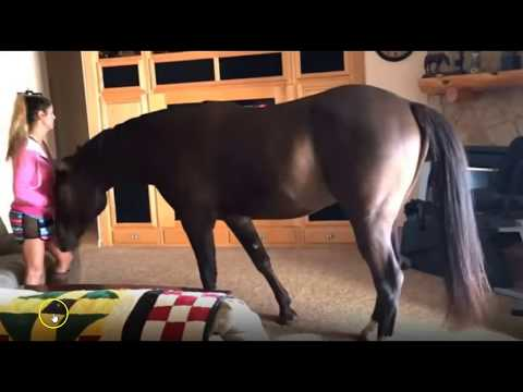 Horse In A House - Is it a Good Thing - It Depends - Discussing Issues