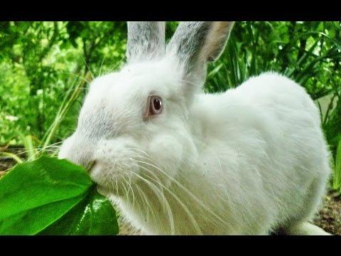 Смешные и забавные кролики