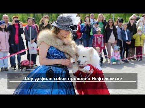 UTV. Новости севера Башкирии за 27 мая (Нефтекамск, Дюртюли, Янаул, Татышлы, Верхнеяркеево)