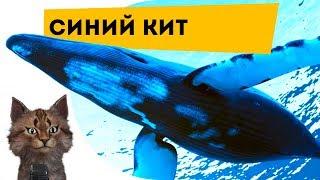 Синий кит | Самое интересное и позновательное про животных для детей | Семен Ученый