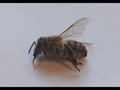 Первые заморозки, пчела посыпалась. В чем причина? КЛЕЩ...