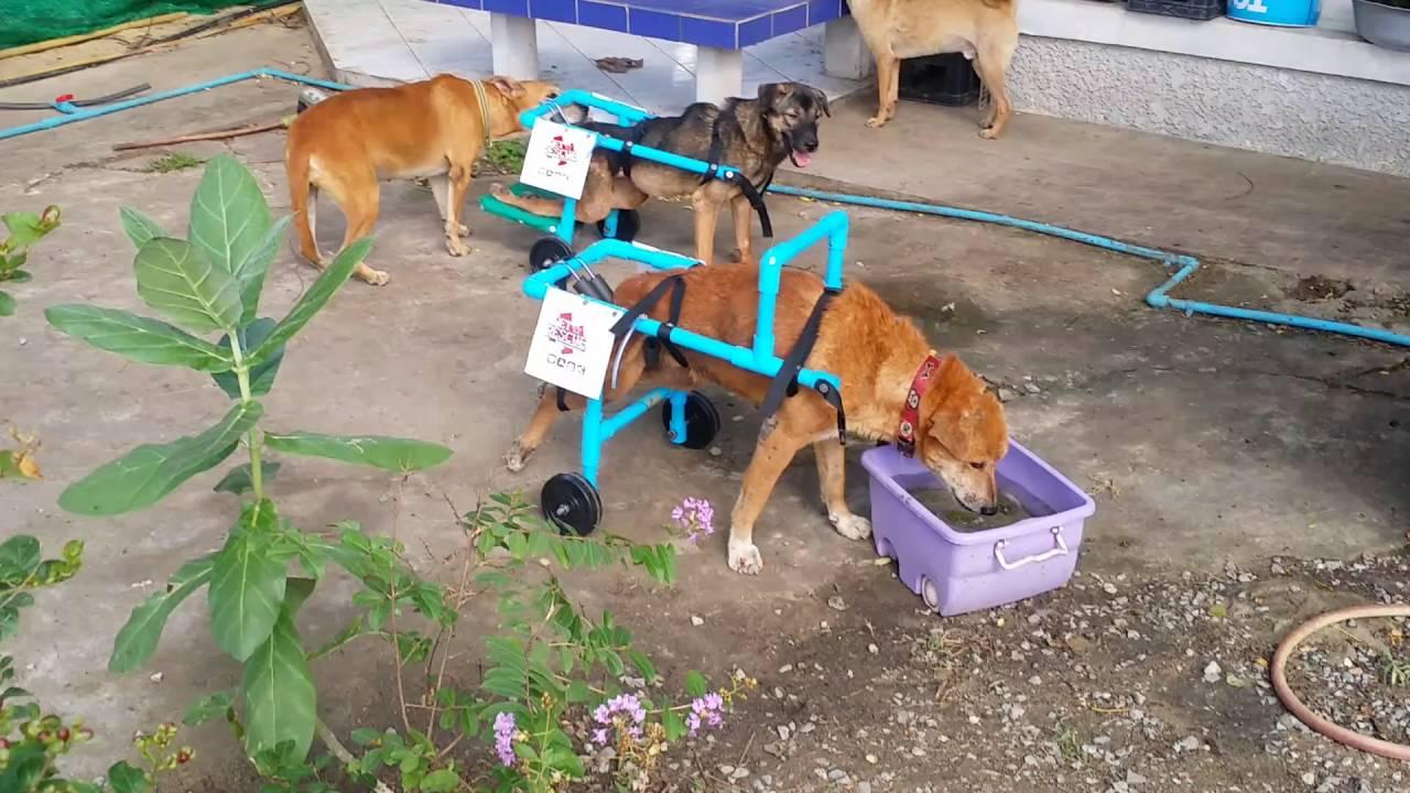 ทำวีลแชร์ให้บ้านหมาพิการ\