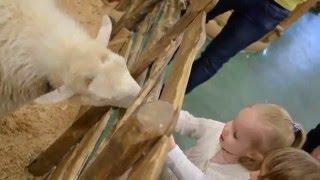 Занятия с ребенком / контактный зоопарк / Новосибирск (КИ)(Спасибо за просмотр, комментируйте, ставьте лайки, подписывайтесь на наш канал https://www.youtube.com/user/LIA4449., 2016-04-19T09:54:28.000Z)