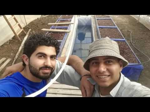 Aquaponic Project in Hakoritna farm