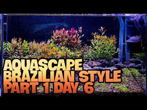 aquascape-brazilian-style-usia-6-hari-sangat-subur-|-tanamannya-ambil-sendiri-di-kebun