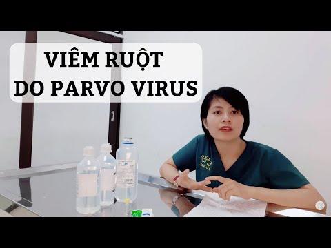 Cách điều trị chó bị parvo virus tại nhà (khi không thể mang đến bệnh viện thú y)