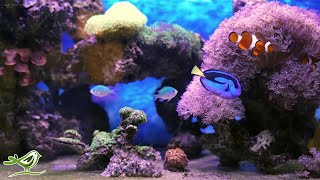 Calm Marimba Music & Water Sounds in Aquarium • Sleep, Relax, Spa, Yoga, Zen Meditation