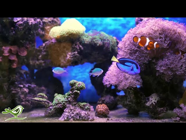 Calm Marimba Music & Water Sounds in Aquarium • Sleep, Relax, Spa, Yoga, Zen Meditation