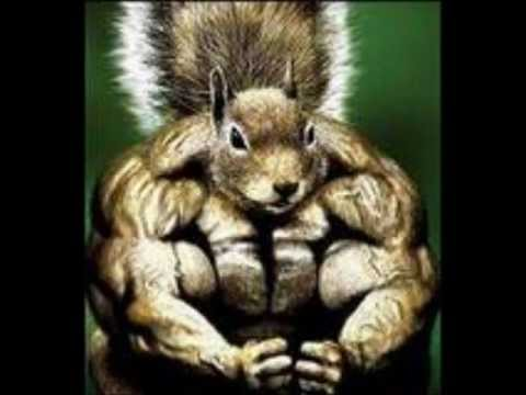 buff rabid squirrel rough vocal take 2 youtube