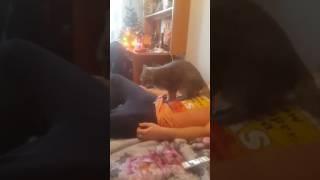 коты тоже умеют делать массаж)