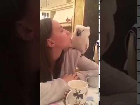 Попугай Жора пьёт  чай