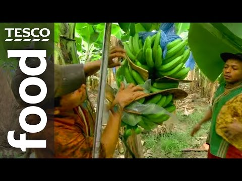 The Story of Banana Farming in Costa Rica | Tesco Food