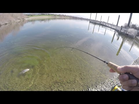 Sight Fishing Trout Infested Waters At Quarry Lakes