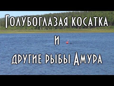 Подводная охота. Голубоглазая косатка и другие рыбы бассейна Амура.